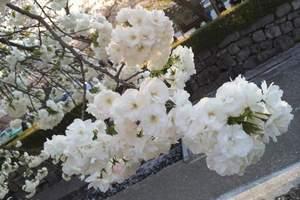 成都到日本九州五日游_东航直飞_福冈长崎熊本旅游_日本新玩法