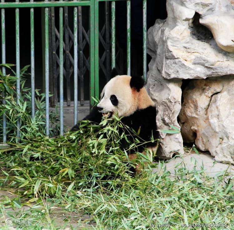 成都熊猫基地、三星堆汽车一日游