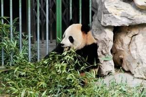 杭州到竹博园+生态博物馆+浙北大峡谷二日游