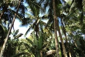 泰安到海南 卡迪亚国际五星+海边酒店分界洲岛 海口往返6日游