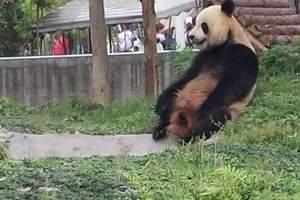 仙芝竹尖熊猫生态园