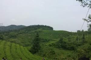 襄阳到保康花千谷茶文化旅游节一日游 含千人农家流水宴中餐