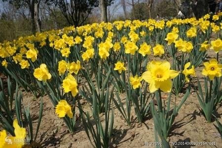 春节旅游周末出行推荐 泰安到扬州 淮安、总理故乡大巴纯玩二日