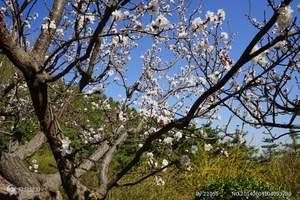 泰安2018年春节价格 西安法门寺 兵马俑祈福美食双飞四日游