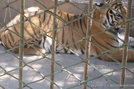 泰安周边带孩子一日游 泰安至济南野生动物世界一日游多少钱