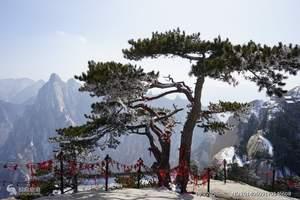 泰安过节放假到西安旅游推荐 舌尖上的西安 古都美食双卧五日游