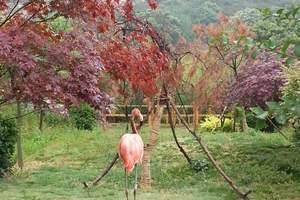 带孩子去哪里动物园好玩?亲子游:青岛黄岛野生动物园一日游