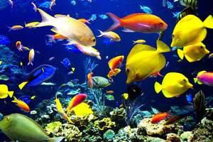 2015年长沙海底世界门票价格115元/人