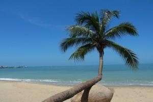 海口到三亚四日游,南湾猴岛、呀诺达、西岛亲海之旅