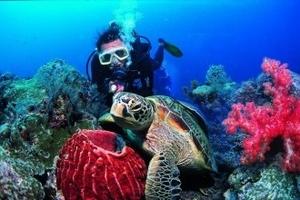 三亚纯净三岛度假五天游,蜈支洲岛分界洲岛南湾猴岛蜜月游亲子游