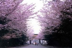 海口到日本六天游,海口到日本旅游团要多少钱,玩转日本旅游攻略