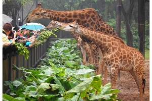 九江出发到广州深圳、长隆野生动物园双卧六日游 纯玩团不进店