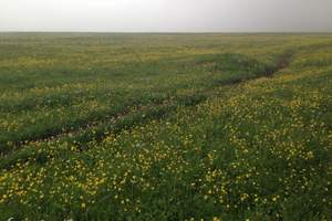 暑期团队北京至涞源空中草原 仙人峪看草观景汽车二日游