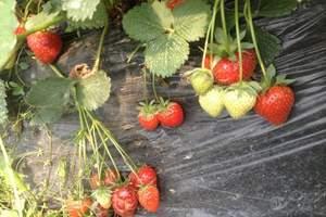 【北京周边郊区旅游线路】大兴野生动物园草莓采摘亲子巴士一日游
