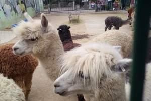 亲子一日游泰安跟团到济南动物园、大明湖一天 泰安本地去哪好玩