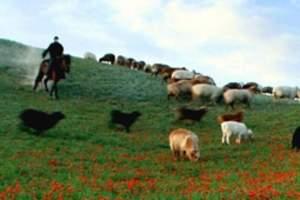 <丝路之旅>天津到新疆_天山天池_吐鲁番_兰州_敦煌双飞6日