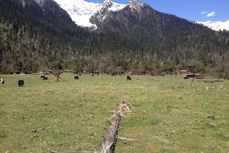 台湾人去西藏办入藏函-林芝进藏拉萨日喀则珠峰大本营8晚9日游