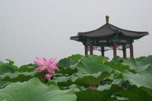 周末:白洋淀赛龙舟、赏荷花汽车两日旅游 端午节品粽子团队游