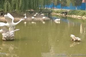 六一去动物园门票多少钱-北方深林动物园一日游-亲子动物园线路
