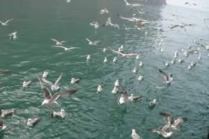 蓬莱出发:长岛万鸟岛海上一日游