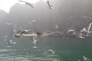 蓬莱出发至长岛游: 纯玩 双船往返一日游
