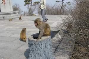 连云港最好地接旅游 花果山、连岛浴场一日游