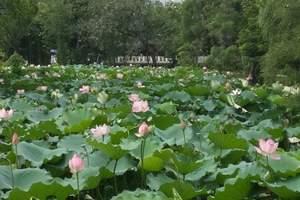 重庆铜梁荷花园、安居古镇一日游|8月赏花自驾游攻略+推荐地