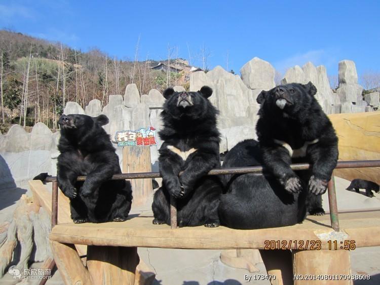 东方熊牧场成人票