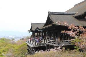 深圳到日本旅游本州芝樱 日式茶道体验、海景温泉美食六天精华游