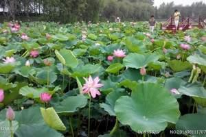 窑湾古镇+项王故里+洪泽湖二日游|江苏旅游攻略 小长假去哪玩