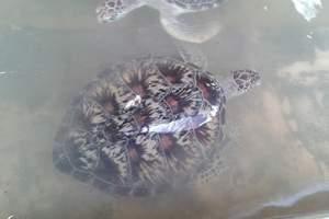 海龟岛国家公园