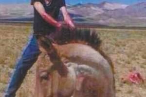 男子在自然保护区内活割藏野驴 已被警方抓获