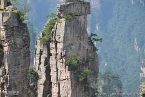 南昌出发到张家界|天门山|凤凰古城|玻璃大峡谷单高五日游