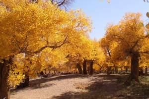 提供内蒙古阿拉善盟额济纳胡杨林旅游普通话导游员服务