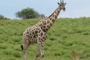 乌鲁木齐出发到南非豪华六飞十一日|乌鲁木齐出发到南非旅游报价