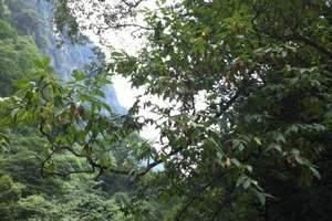 中秋节放假怎么玩_去黑山谷旅游_黑山谷、龙鳞石海二日游