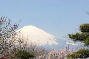 南京到日本品质6日游_直飞日本成田_名古屋富士山箱根滑雪温泉