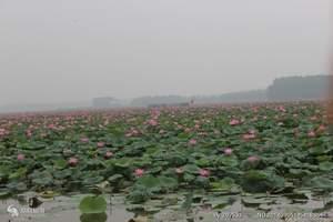 99元买一赠一 泰安到微山湖红荷湿地+小李庒赏花一日游