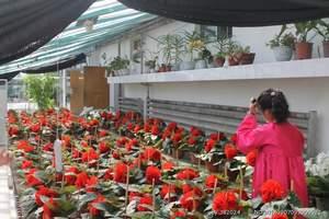 罗先三日-珲春,朝鲜旅游,罗先旅游,延边到罗先