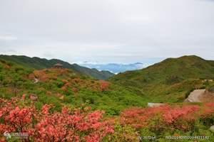 大围山杜鹃花节 大围山森林公园一日游 春游赏杜鹃