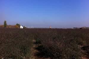 紫缘香草园