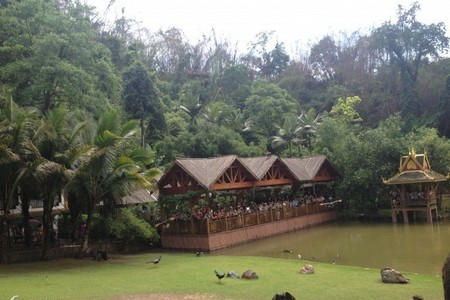西双版纳标三线双飞五日游【植物园、 野象谷 、原始森林公园】