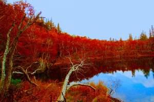 青岛去长白山旅游推荐_长白山天池魔界蛟河红叶谷吉林双飞五日游