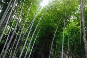 重庆周边凉快的地方  永川茶山竹海一日游 重庆周边避暑一日游