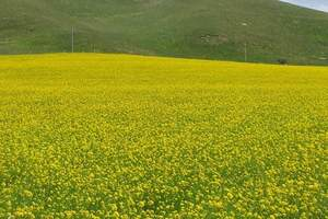【暑期兰州到夏河旅游】拉卜楞寺|桑科草原一日游