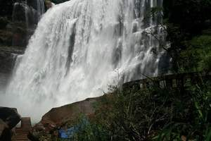 赤水大瀑布、佛光岩、桫椤2日游