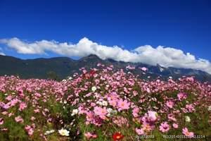 丽江玉龙雪山纯玩一日游(含大索道冰川公园、蓝月谷、白沙古镇)