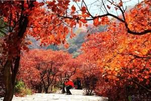 青岛旅行社_青岛出发去临朐石门坊赏红叶一日游_霜叶红于二月花