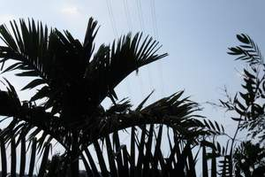 恩施到海南雙飛、恩施直飛海口、純凈椰子之旅6日游