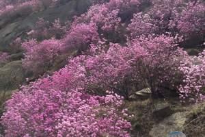 【亲子游】黄岛大珠山赏花+石门古寺+海军公园放风筝亲子一日游